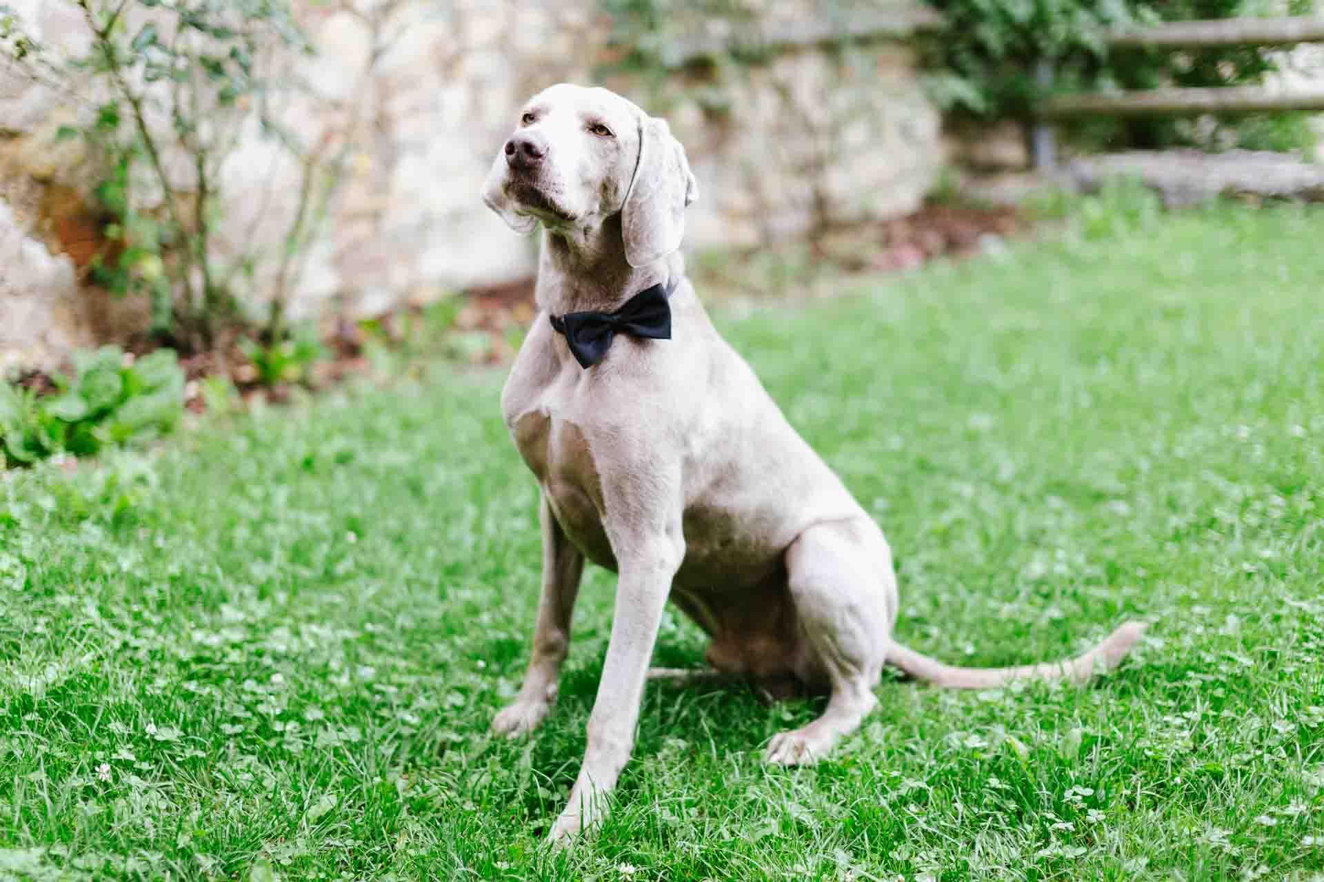Hochzeit_Loerrach_Hund
